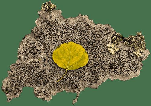 Yellow leaf on lichen