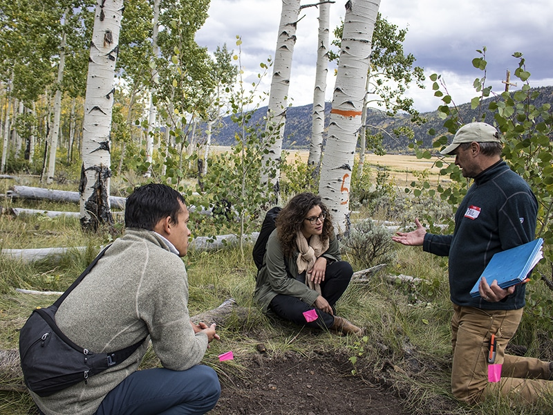 Image of researchers investigating the Pando tree