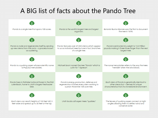 a big list of facts about the pando tree
