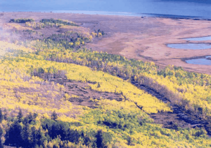 Image of clear cutting of Pando - History of Land Management in Pando