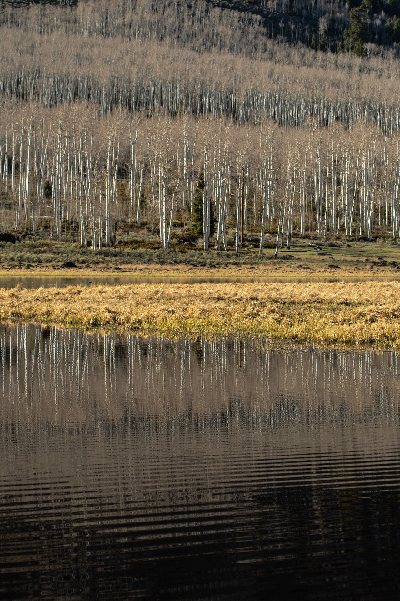 Meeting Pando - View of Pando from Coot Slough