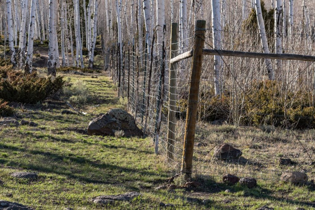 Fence in Lower Pando