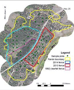 Pando Map