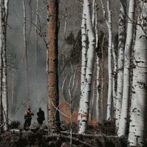 wildfire in aspen landscapes