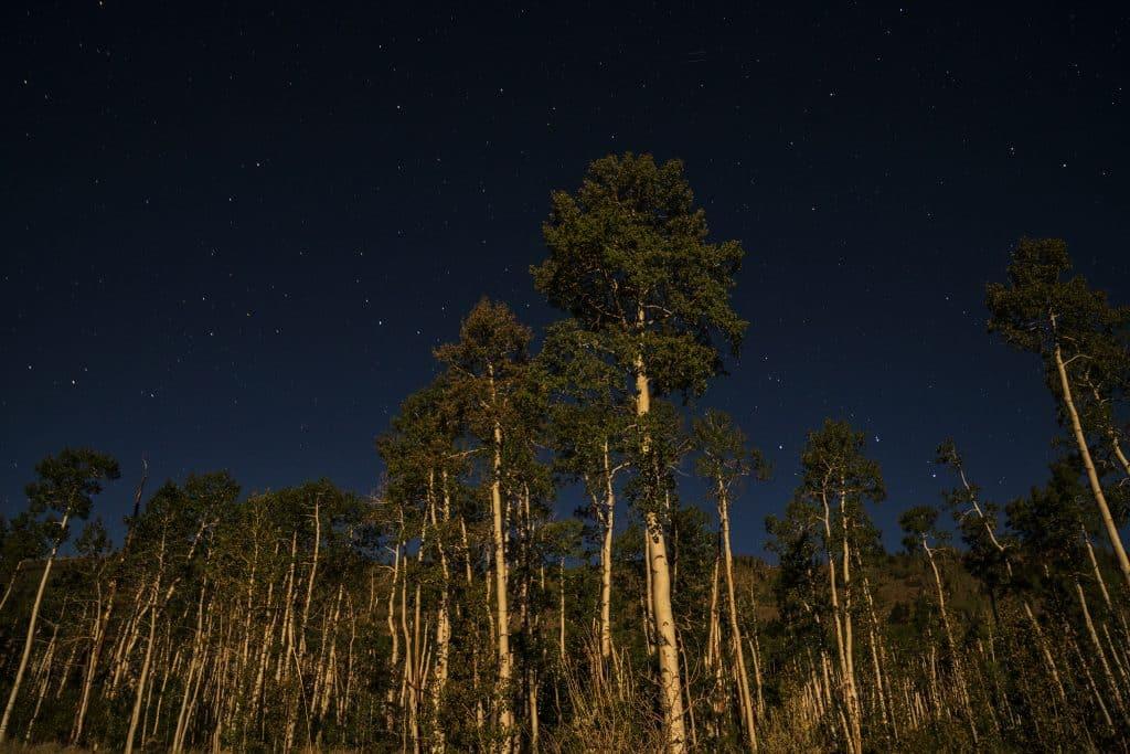 Pando Tree at Night